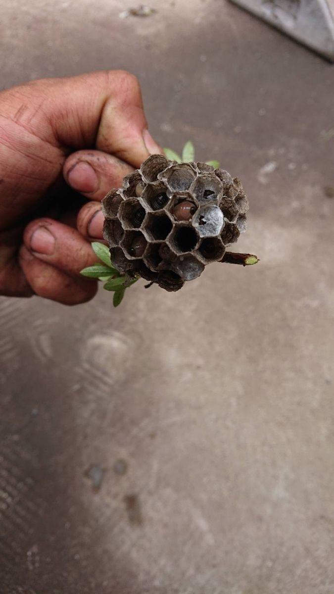 ハチにご用心サムネイル