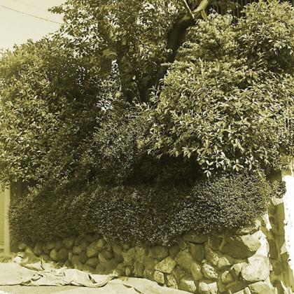 高低差のある庭 ~丸太杭で土留め~ 世田谷区